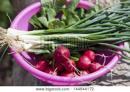 Radishes And Green Onions