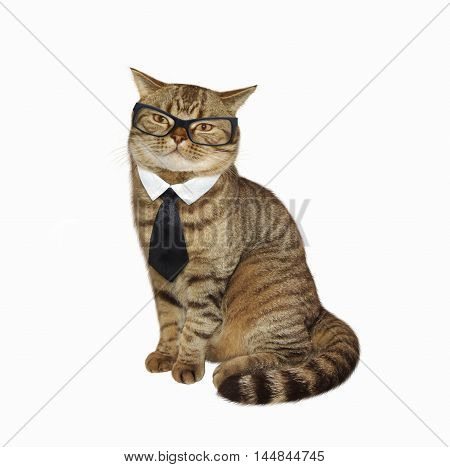 Cute scottish straight cat is wearing tie and glasses on white background