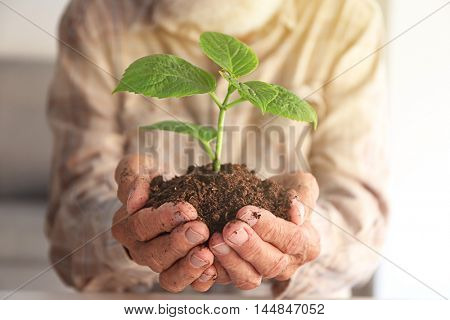 Old man holding plant in hands