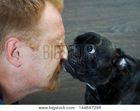 Dog bites man's nose. Dog black French bulldog. The face and muzzle close. Men hurt