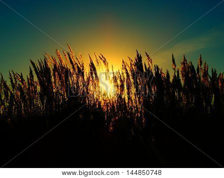 Autumn grass at sunset season summer sun nature evening sky air field plant view wind weather open spaces