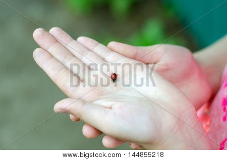 little girl holding on hand red ladybird