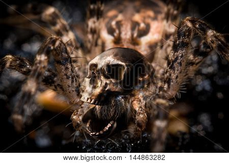 Extreme close up macro shot of a large wolf spider with human skull