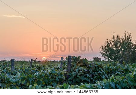 Sunset at fields of vines in Moldova dark and low light