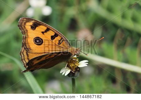 common butterfly on grass flowers with in nature