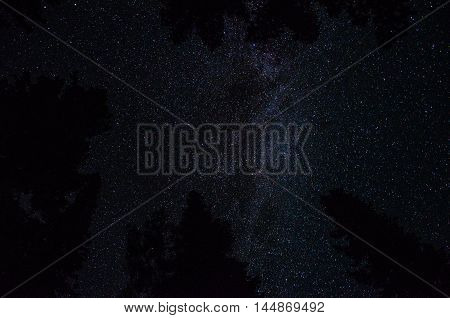 starry sky in the mountains. starry sky in the woods