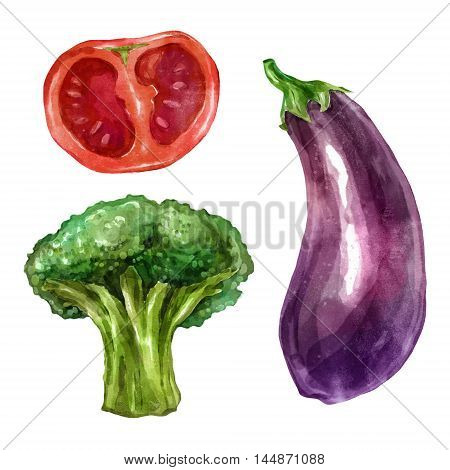 Watercolor vegetables eggplant broccoli tomatoes. Big collection of hand drawn illustrations. Good for book illustration, magazine or journal article.