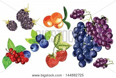 Blackberry, blueberry, cranberry, strawberry and grapes fruit set Vector in Watercolor style
