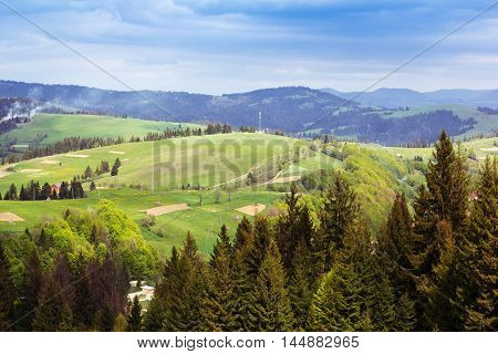 landscape consisting of a fir-trees on the foreground and Carpathians mountains with green grassy valley and fir-trees on the middle and cloudy skies on the background