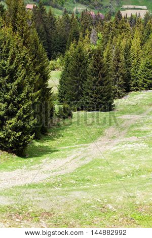 landscape consist of green grassy valley with footpath on a foreground and row of green fir-trees with hills on a background