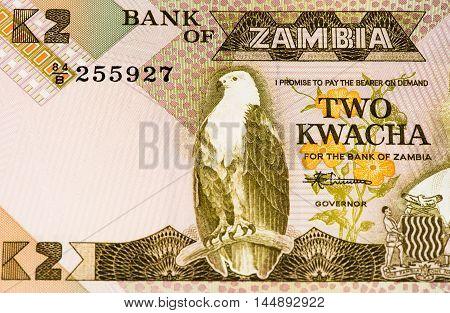 2 Zambian kwach bank note. Zambian kwacha is the national currency of Zambia