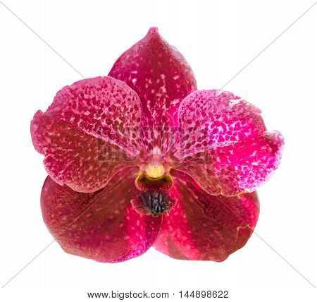 beautiful bloom orchid isolated on white background