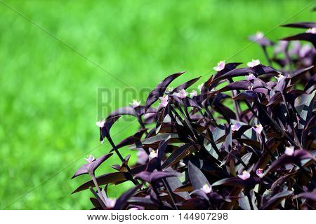 the decorative flowers on a green background