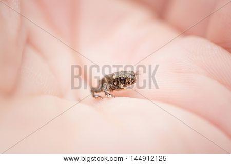 Tiny Frog On Hand
