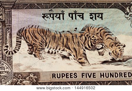500 Nepalese rupee bank note. Nepalese rupee is the national currency of Nepal