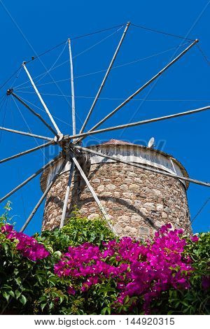 Old traditional windmill and bougainvillea in Kos island, Greece