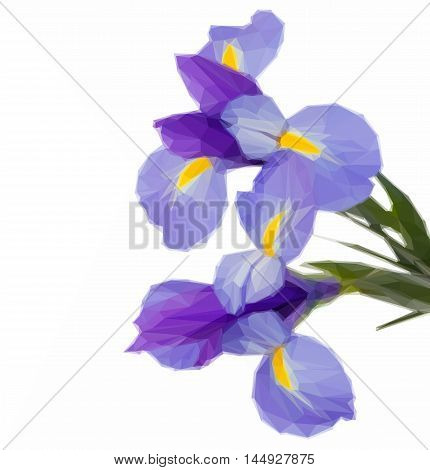Low poly illustration of blue irises flowers
