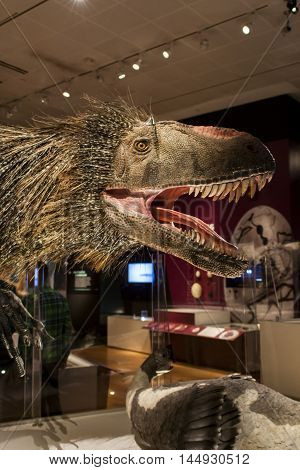 Yutyrannus Huali In American Museum Of Natural History