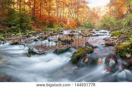 Autumn in the forest mountain stream. Beautiful autumn forest, rocks covered with moss. Mountain river with rapids and waterfalls. Carpathian.