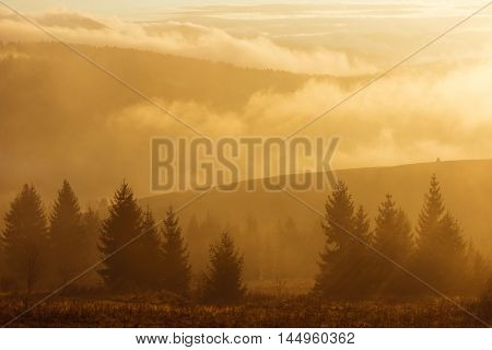 Autumn landscape with a fir forest in the mountains. Dawn with fog and sun. Color toning
