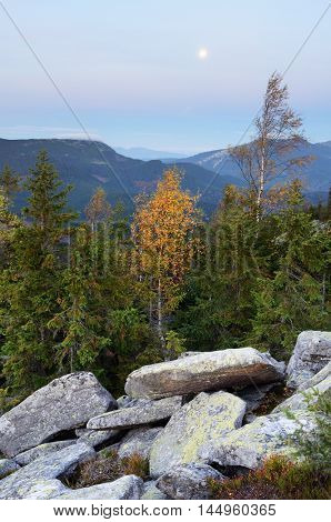 Autumn landscape in the mountains. Birch with yellow leaves on a ridge. Fir forest and stones. Carpathians, Ukraine, Europe