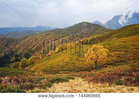Autumn landscape. Cloudy day in the mountains. Birch tree on the mountain Mkheer. Zemo Svaneti, Georgia