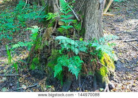 Fern growing on tree in the forest