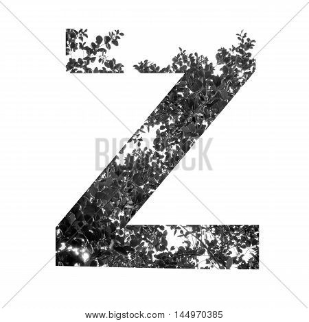z letter double exposer with black and white leaf