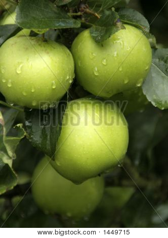 Green Apples 2