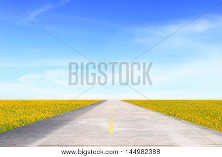 The road on the grassland under the blue sky.