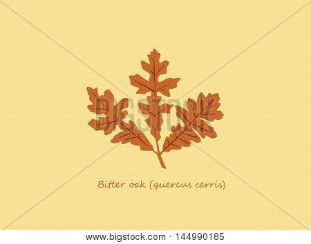 Isolated autumn bitter oak leaf on beige background with lettering