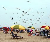 image of beach holiday  - people on the beach - JPG