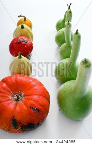 Different Kind Of Pumpkins Isolated On White Background