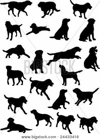 Labrador Dog Silhouette Vector