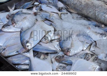 raw sea fish selling in the markets