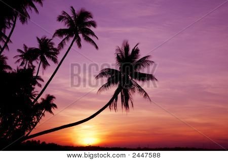 Palms At Sunrise