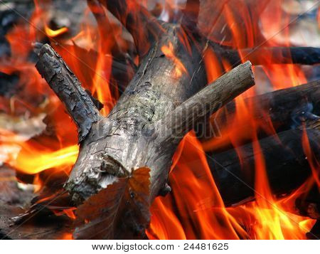 wood in the fire