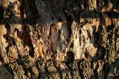 Tree Bark Texture Background. Bark Of Tree Trunk On Sunny Outdoor. Nature And Ecology. Botany And Pl poster