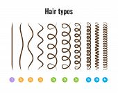 Vector Illustration Of A Hair Types Chart Displaying All Types And Labeled. Curl Types. poster