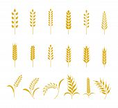 Set Of Simple Wheats Ears Icons And Grain Design Elements For Beer, Organic Wheats Local Farm Fresh  poster
