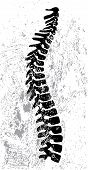 picture of spinal cord  - vector illustration of an abstract spinal cord design on grungy background - JPG
