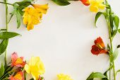 Colorful Alstroemeria Frame On White Background. Flora Botany And Spring. Beautiful Flower Bouquet O poster