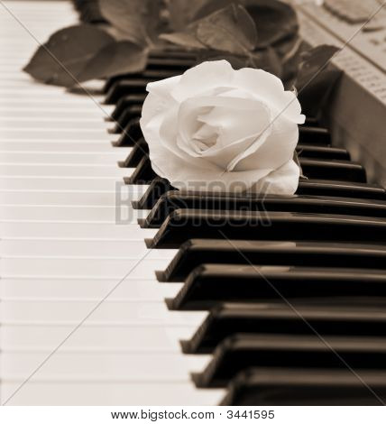 Beautiful White Rose On Piano Keyboard