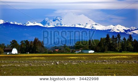 Mount Baker Skagit Valley Yellow Flowers Washington State