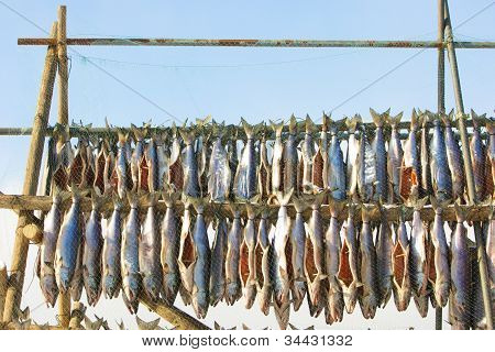 Salmon strips drying on racks with protection net