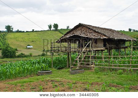 Cottage In A Corn Field In Chiangmai