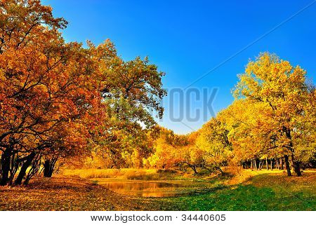 Autumn forest and a small lake