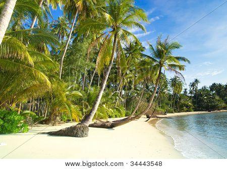 Palm Panorama grün Übernachtung