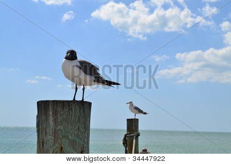 Seagulls on beach pilings