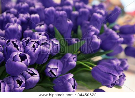 purple tulip flowers arranged for decorated in house